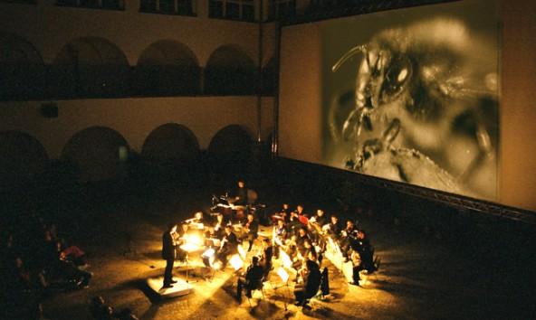 Stadtkultur-Filmharmonie-Biene-Maja