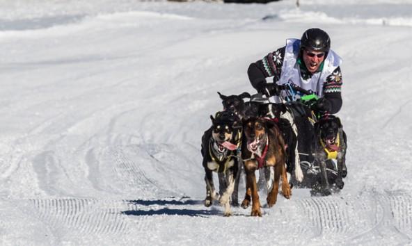 Hundeschlittenrennen-Sexten-Alpen-Trail-2014-Seriensieger_Winter_Heini_GER