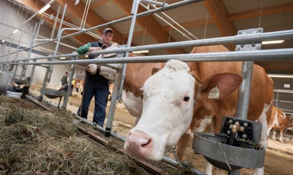 Wohin geht die Landwirtschaft in Osttirol? Auch diese Frage soll beim Diskussionsabend in der LLA beantwortet werden. Foto: Martin Lugger
