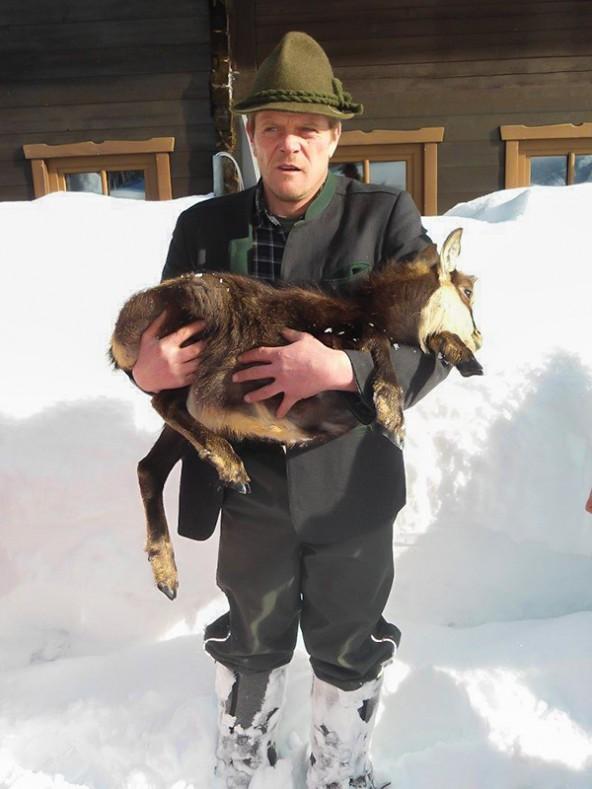 Aufsichtsjäger Hubert Troger transportierte das verirrte Gamskitz von den Häusern im Ortsteil St. Leonhard zu einer nahegelegenen Wildfütterung. Fotos: Jägerschaft St. Jakob