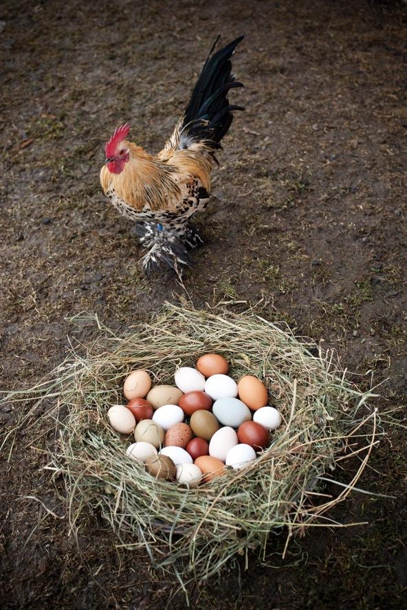 bunte eier_2
