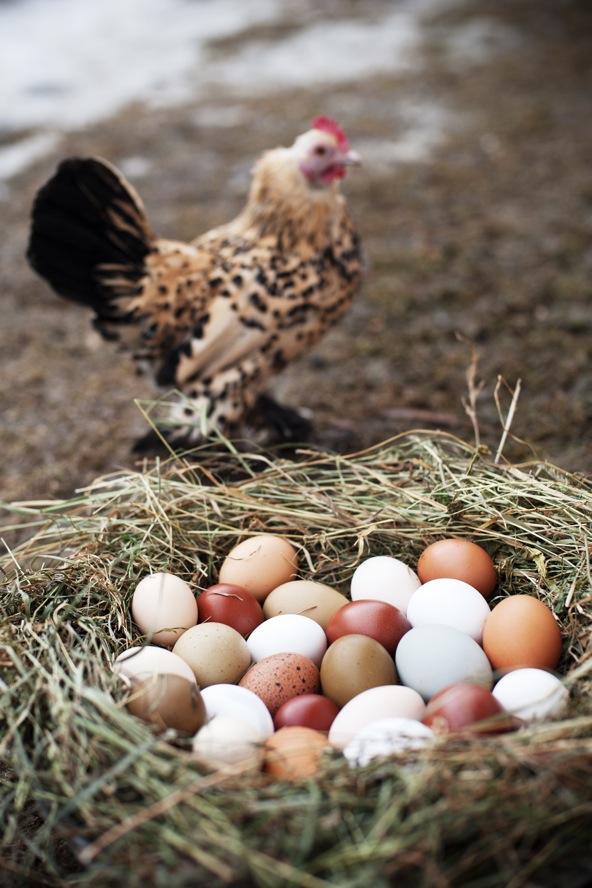 bunte eier_3