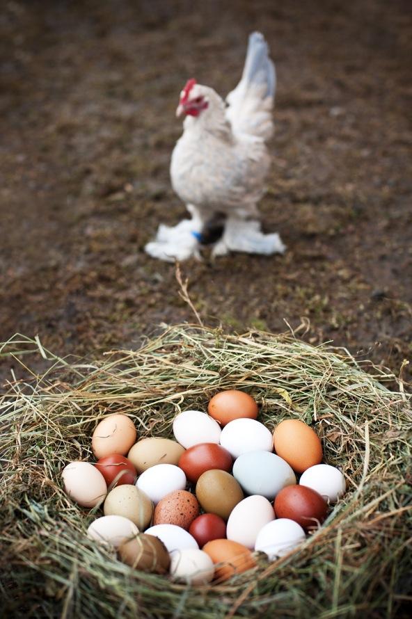 bunte eier_4