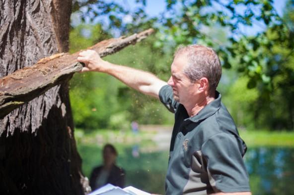 """Der Baum ist von einem """"Brandkrustenpilz"""" befallen. Die Rinde des Baums kann man mit einer Hand abreißen."""