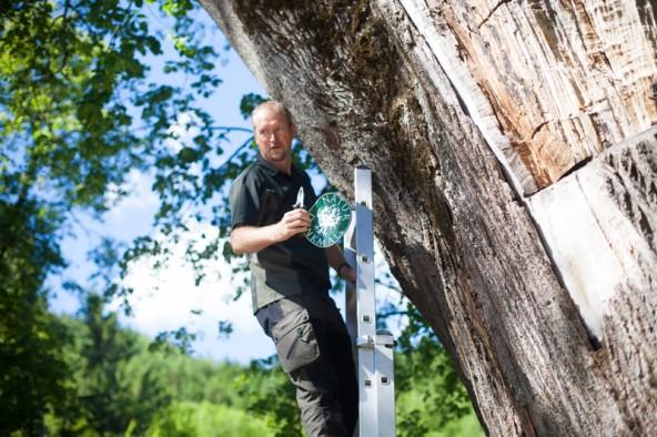 """Am 20. Dezember 2013 hat die Bezirkshauptmannschaft den Status """"Naturdenkmal"""" an der Linde aufgehoben. Heute, Freitag, 6. Juni, montierte Martin König auch das dazugehörige Täfelchen ab."""