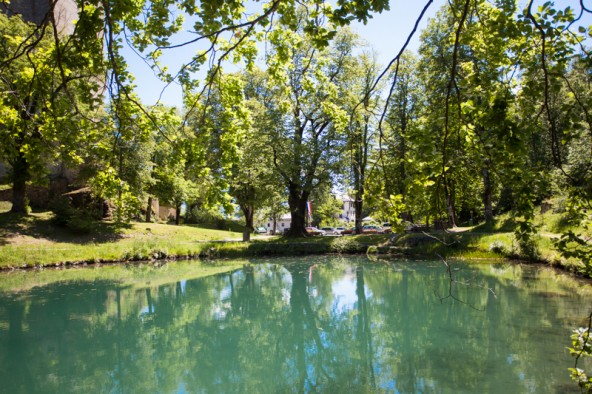Der gesamte Schlosspark ist ein Naturdenkmal.