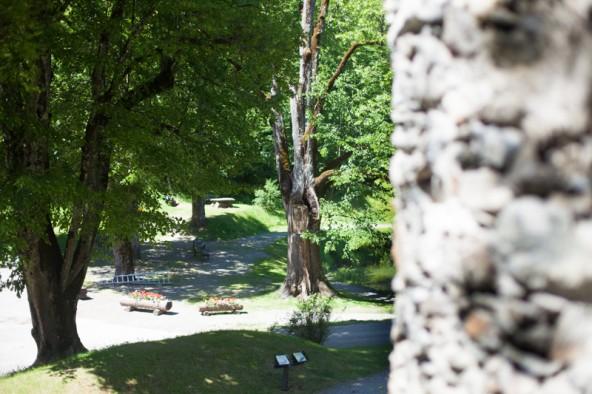 Im Schlosspark gibt es insgesamt rund 120 Bäume. Einer der Ältesten wird jetzt gefällt. Fotos: Dolomitenstadt/Egger