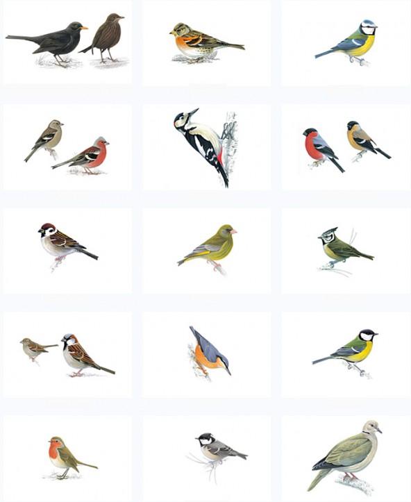 vogeltest