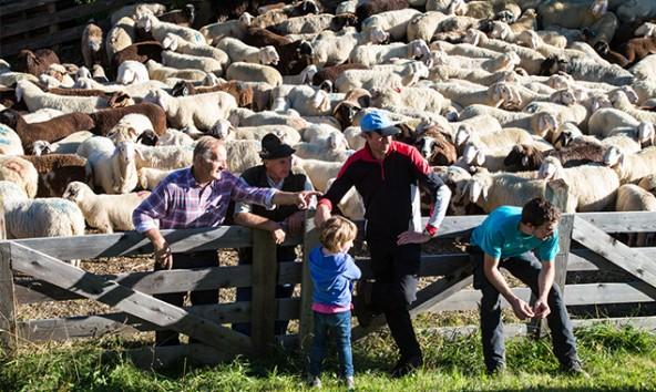 Bauern und Bäuerinnen ab 18 Jahren und kammerumlagenpflichtige Grundbesitzer können bis 25. März wählen