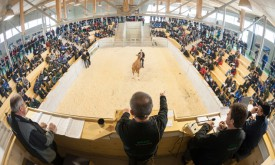 Viehversteigerungen auch in Osttirol abgesagt