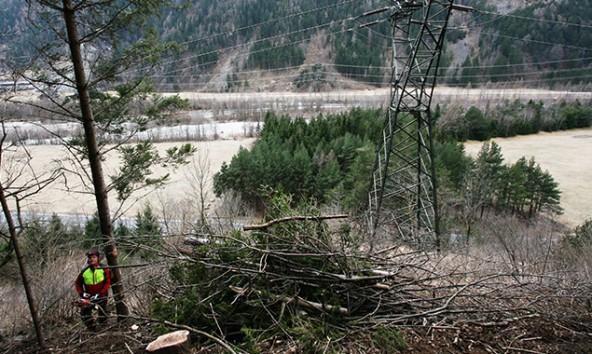 Mit der Eröffnung des forsttechnischen Ingenieurbüros soll die nachhaltige Waldbewirtschaftung unterstützt werden. Foto: Maschinenring
