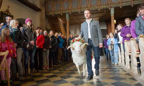 Der Widder wird zum Altar geführt. Foto: EXPA/JFK