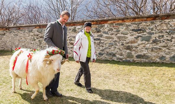 Ein wenig schüchtern erfolgt die Begegnung zwischen Tier und neuer Besitzerin. Foto: EXPA/JFK