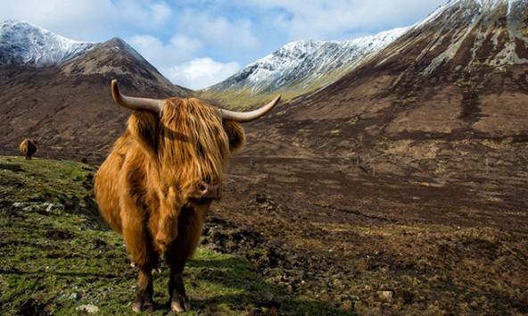 Das Highland Cattle lässt sich weder vom Wetter noch von den Touristen stören. Fotos: Jörg Schnell