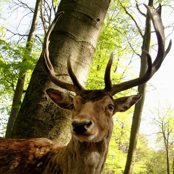 Er knabbert gern an jungen Bäumen und muss deshalb ins Gras beißen. Foto: complize/photocase.com