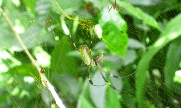 Costa Ricas Urwälder sind voller Überraschungen. Fotos: Daniela Ingruber