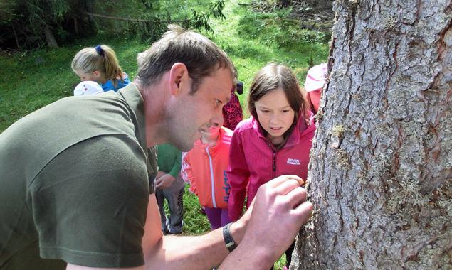 Tabea Kleinlercher beobachtet kritisch, wie Waldpädagoge Gregor Gasser einen Borkenkäfer aus einem sterbenden Baum schneidet.
