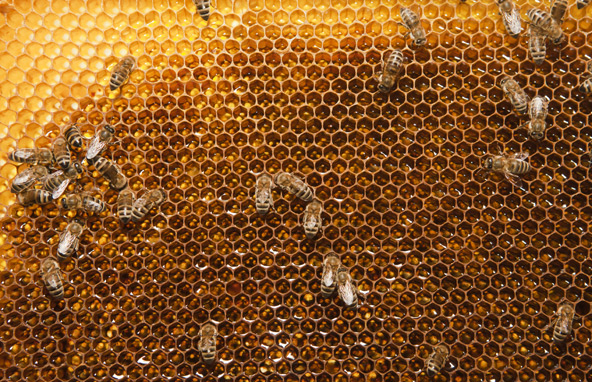 Bienen bergen für manche Menschen Lebensgefahr. Eine rasch verabreichte Adrenalinspritze kann das Leben retten. Foto: Ramona Waldner