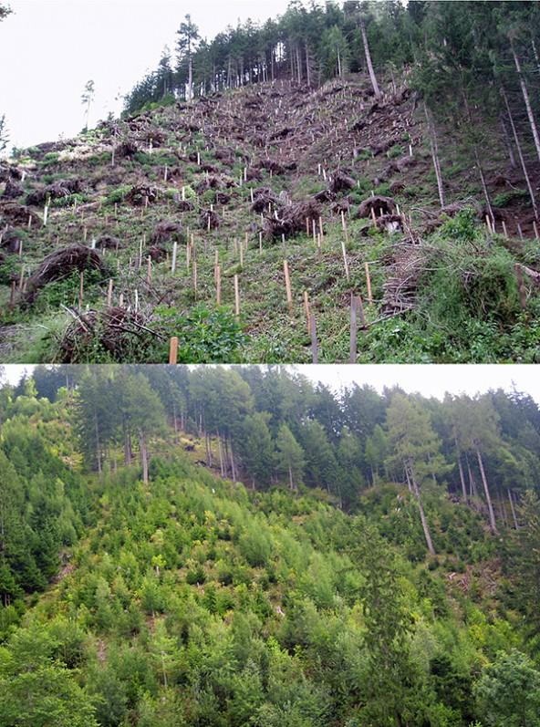 Ein Vorzeigeprojekt ist die Schutzwald-Aufforstung in Thurn.