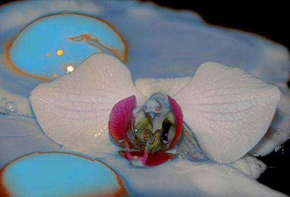 """""""Träume von Orchideen"""" ist der Titel dieses Egg Art-Bildes. Fotos: Green Pearls"""