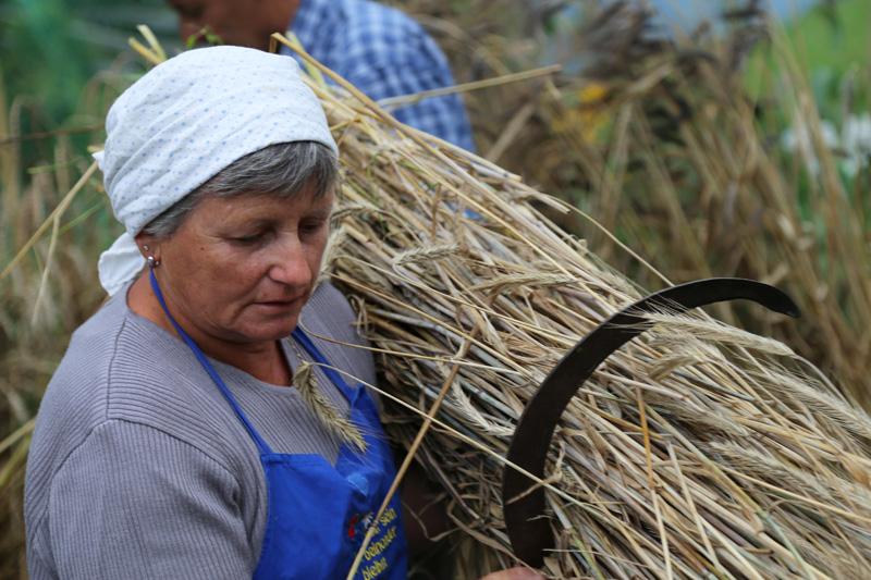 Paula Reiter zeigt das Ernten mit der Sichel.