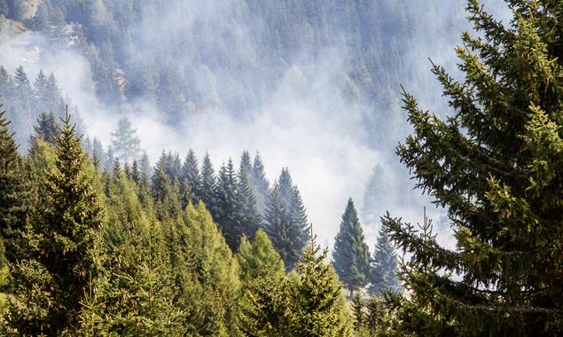 Der Brand am Zettersfeld geriet zum Glück nie außer Kontrolle.