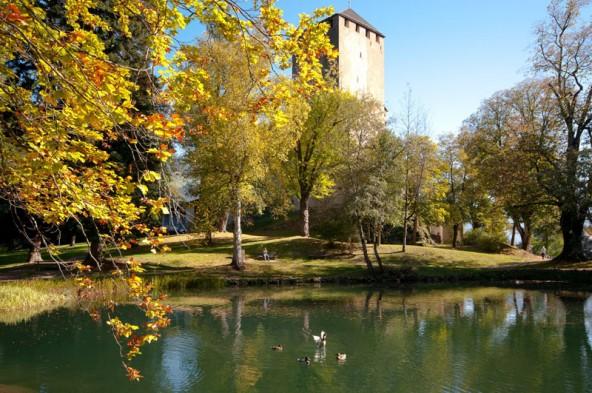 Enten im Teich, Fledermäuse und Falken im Gemäuer. Die Vogelwelt des Schlosses ist bunt. Foto: Sc hloss Bruck/Silvia Ebner