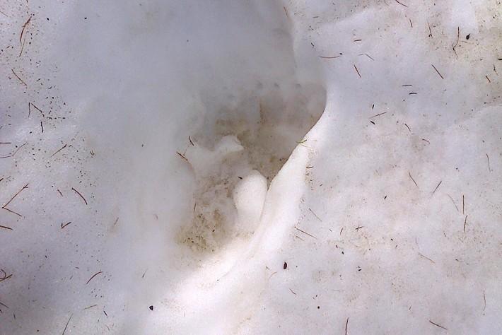braunbaerspur-im-schnee