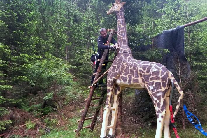 giraffe-bogenschuetzen